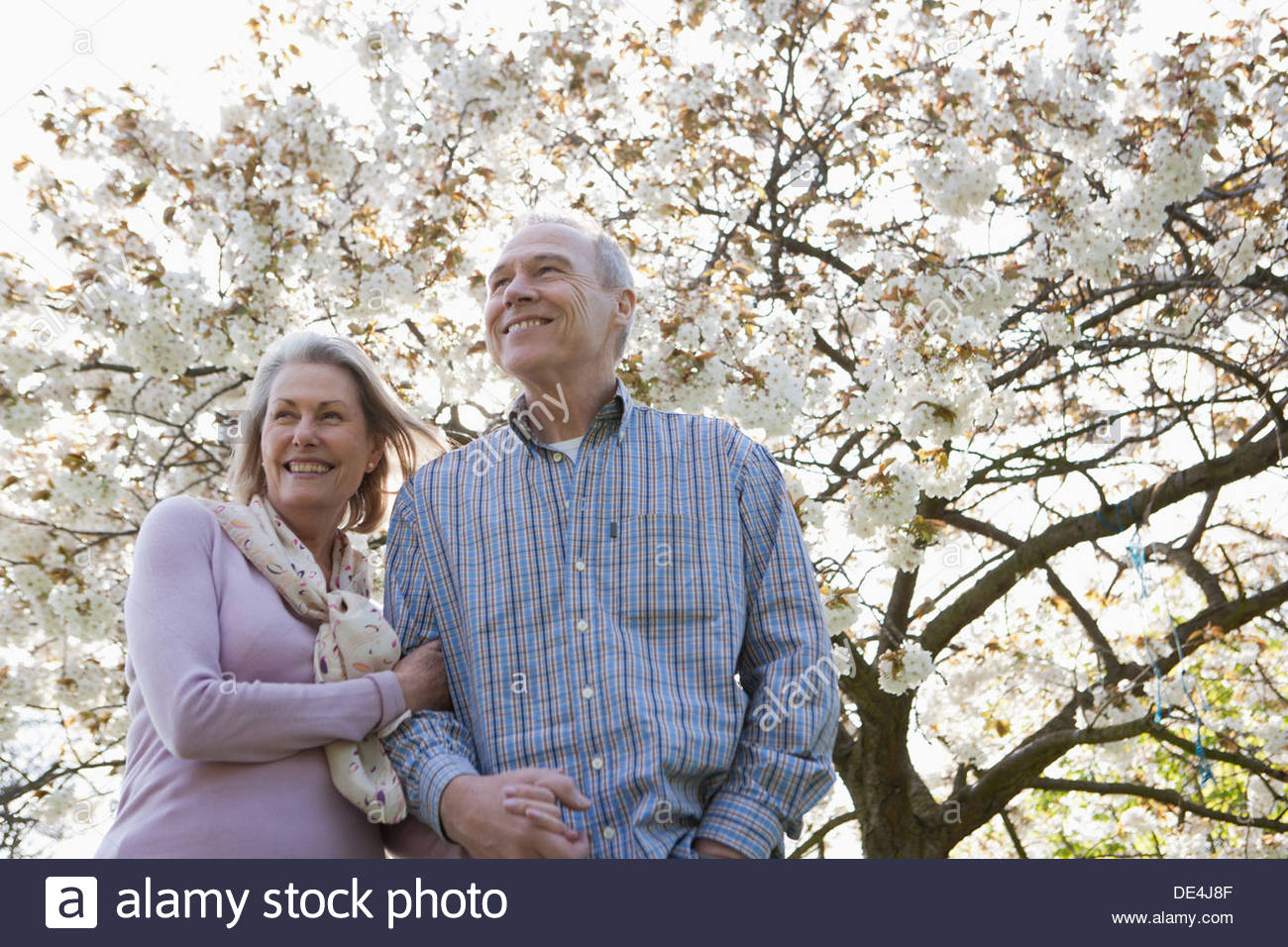 Senior couple hugging under blooming tree - Stock Image
