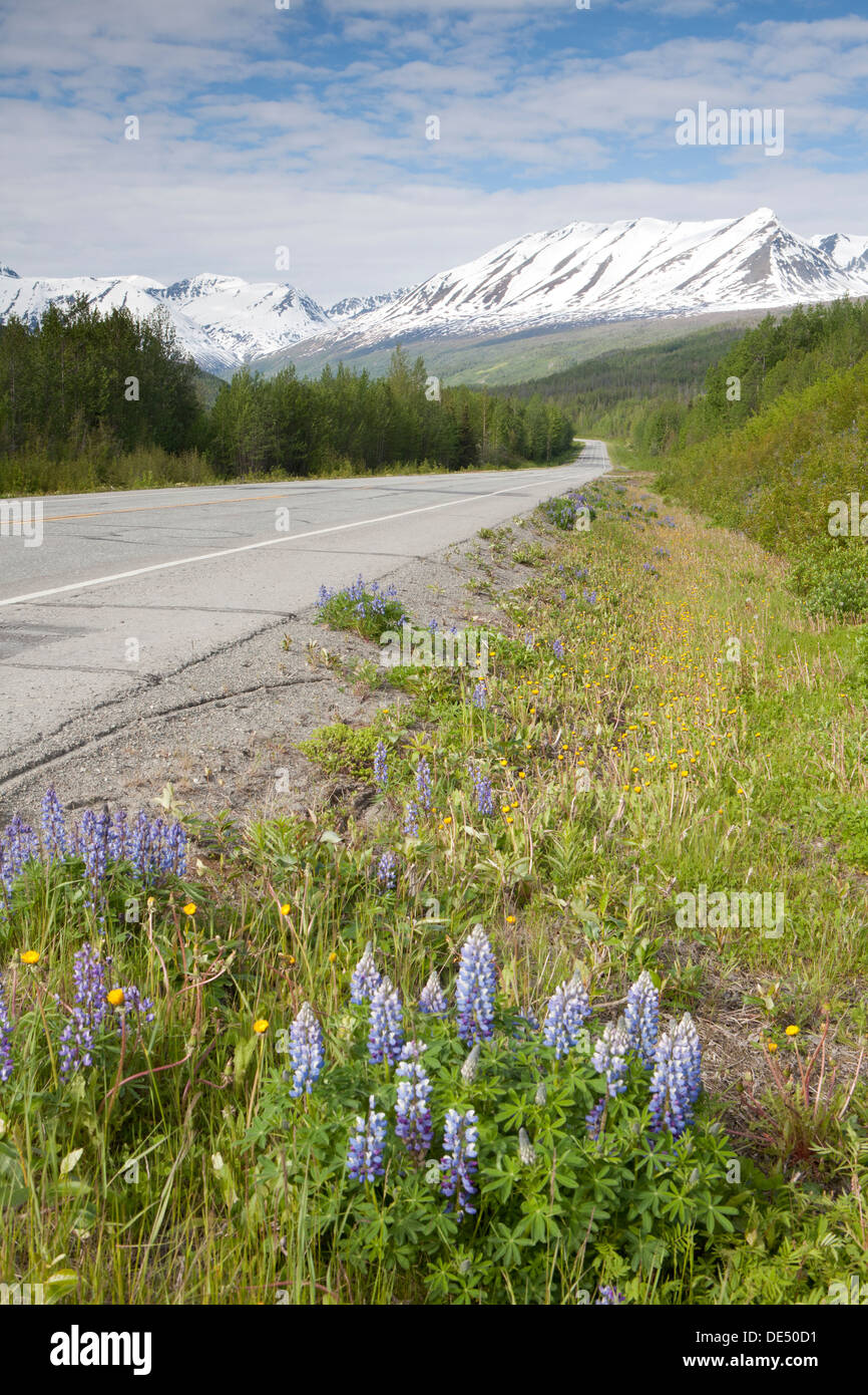 View from Richardson Highway, Alaska, U.S.A. - Stock Image