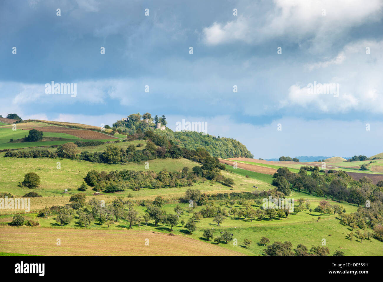 Agricultural land in the hills of the Hegau region with fields, orchards and pastures, Maegdeberg hill with castle ruins at back - Stock Image