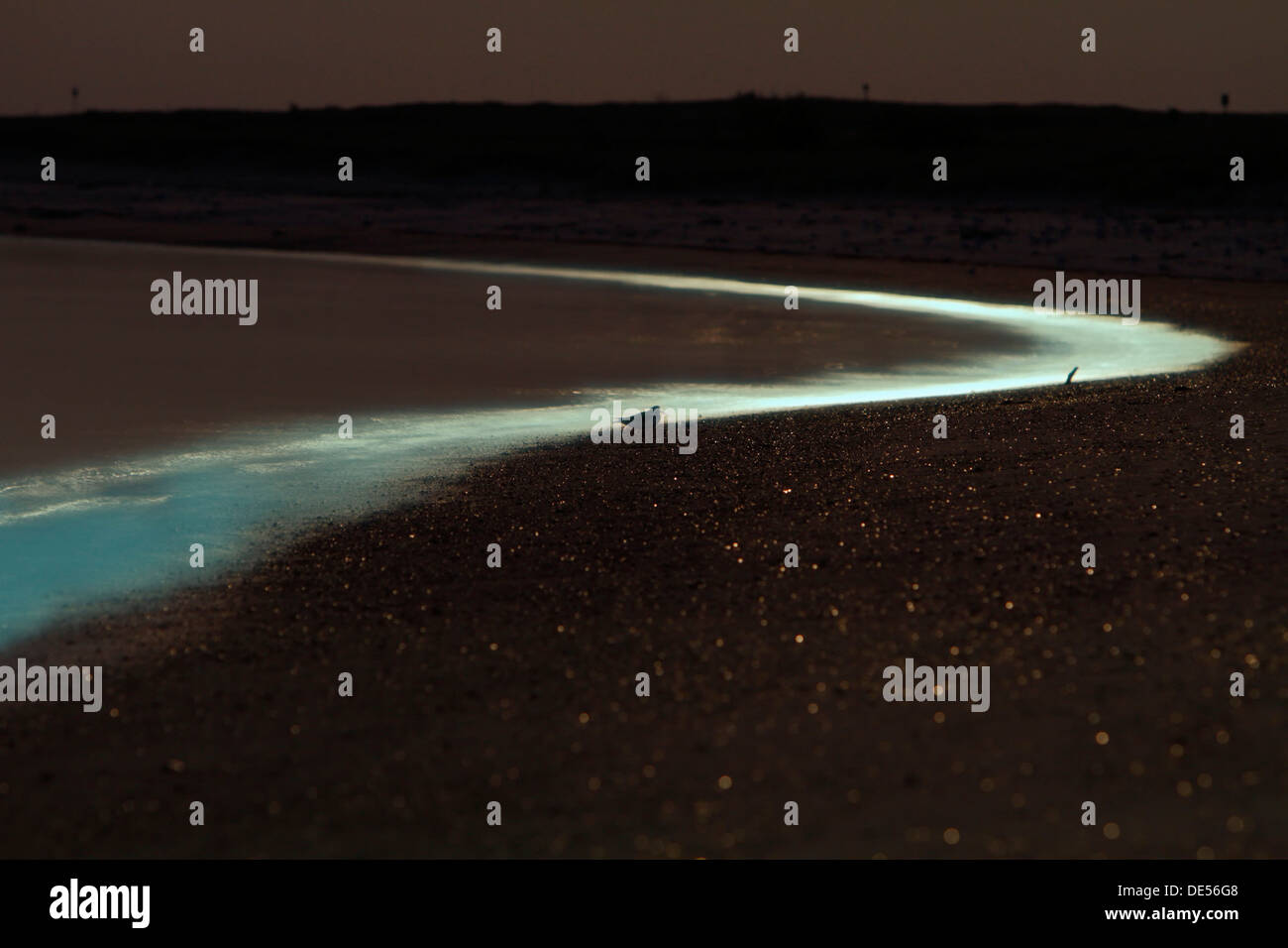 Light of the full moon on the beach, bioluminescence, Sea Sparkle (Noctiluca scintillans), Minsener Oog, East Frisian Islands, - Stock Image