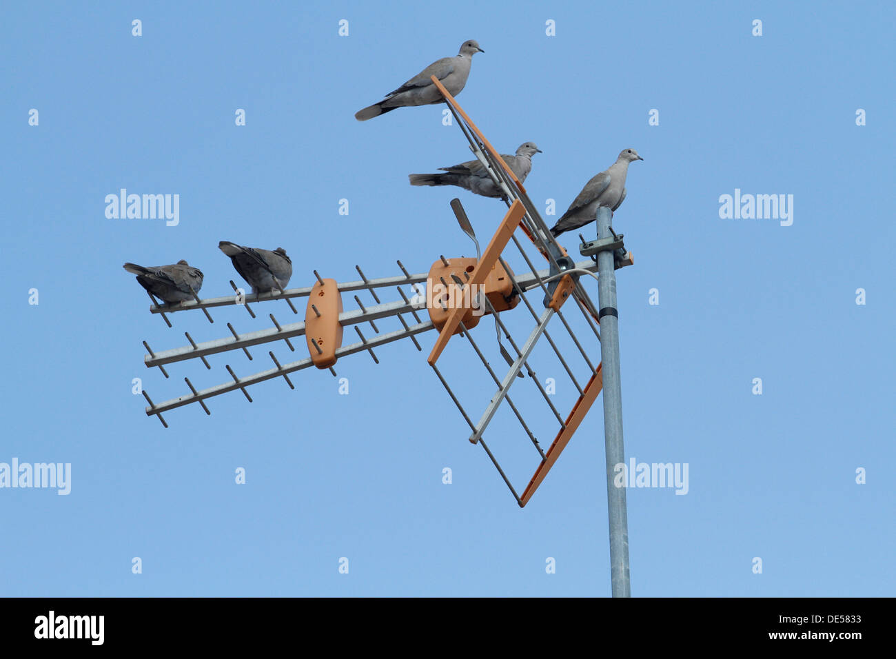 Pigeons standing on a television antenna. - Stock Image