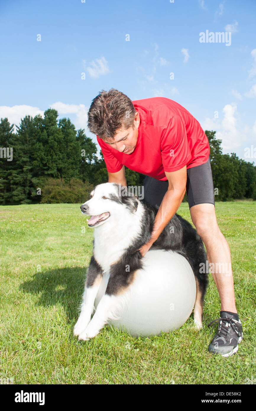 Dog trainer helping his dog stretch out his joints on a yoga ball. Promotes good balance and health for dogs - Stock Image