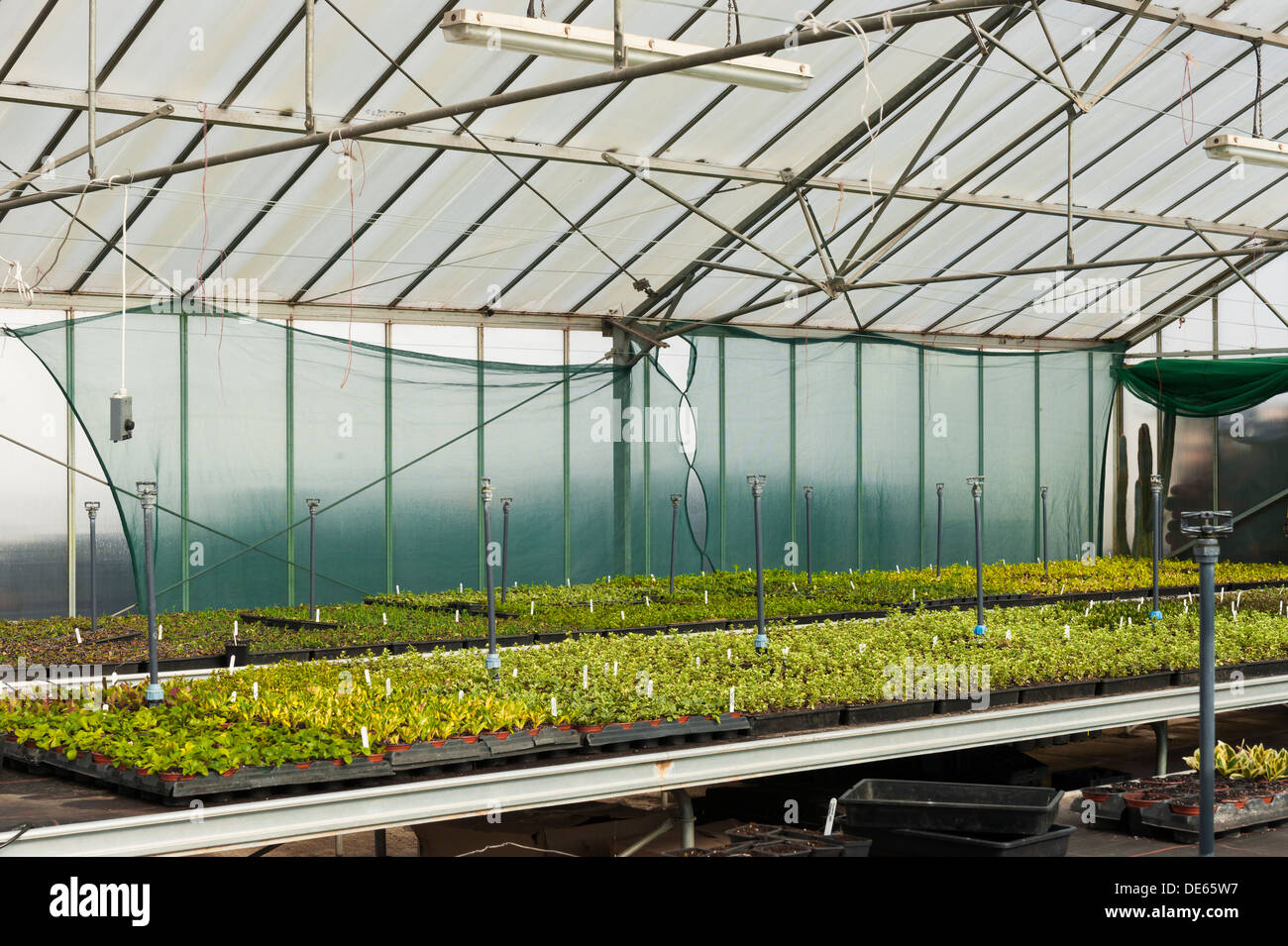 A greenhouse provides a warm environment for a large number of fledgling nursery plants. - Stock Image