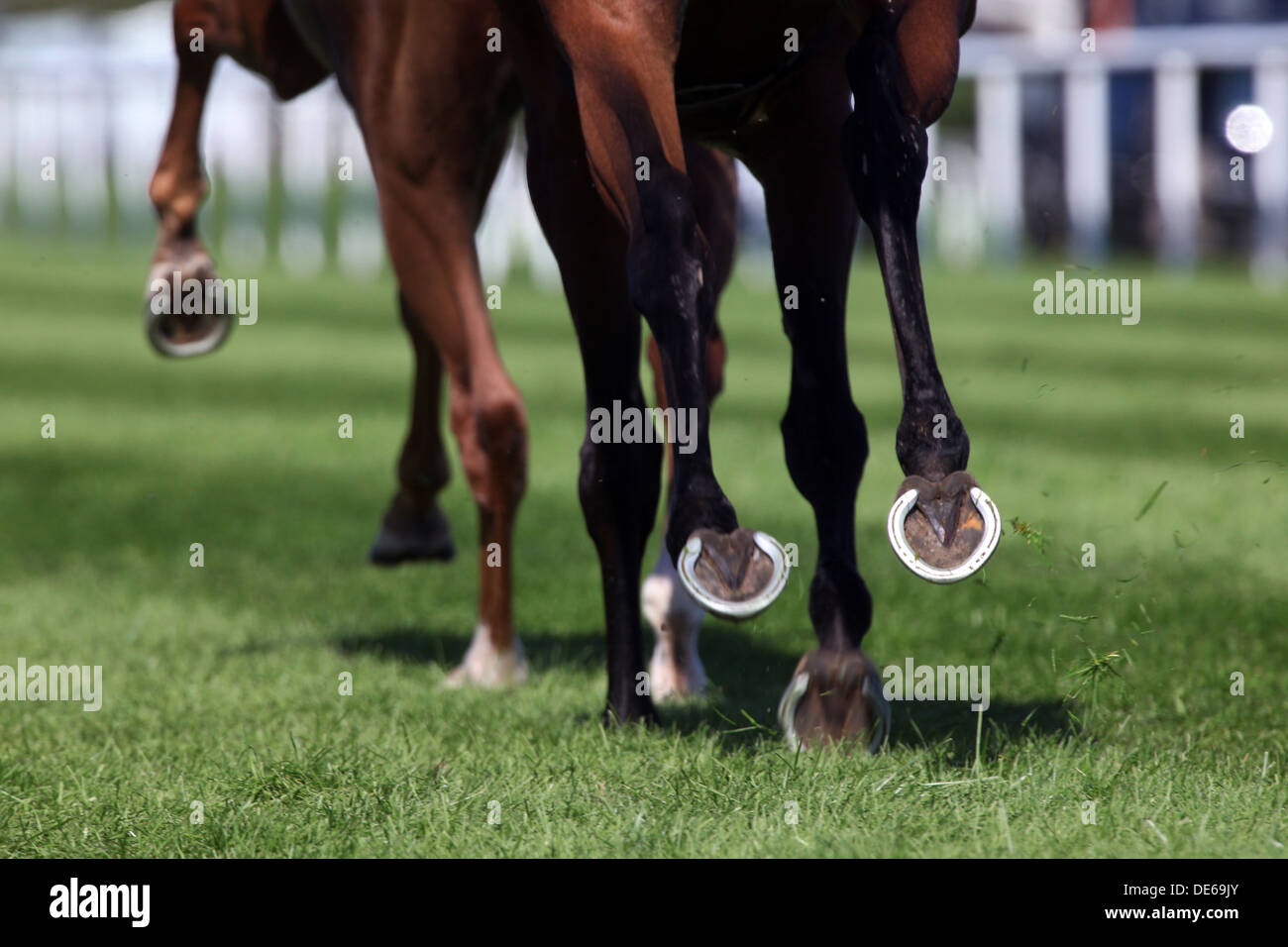 Iffezheim, Germany, hooves galloping on grass - Stock Image