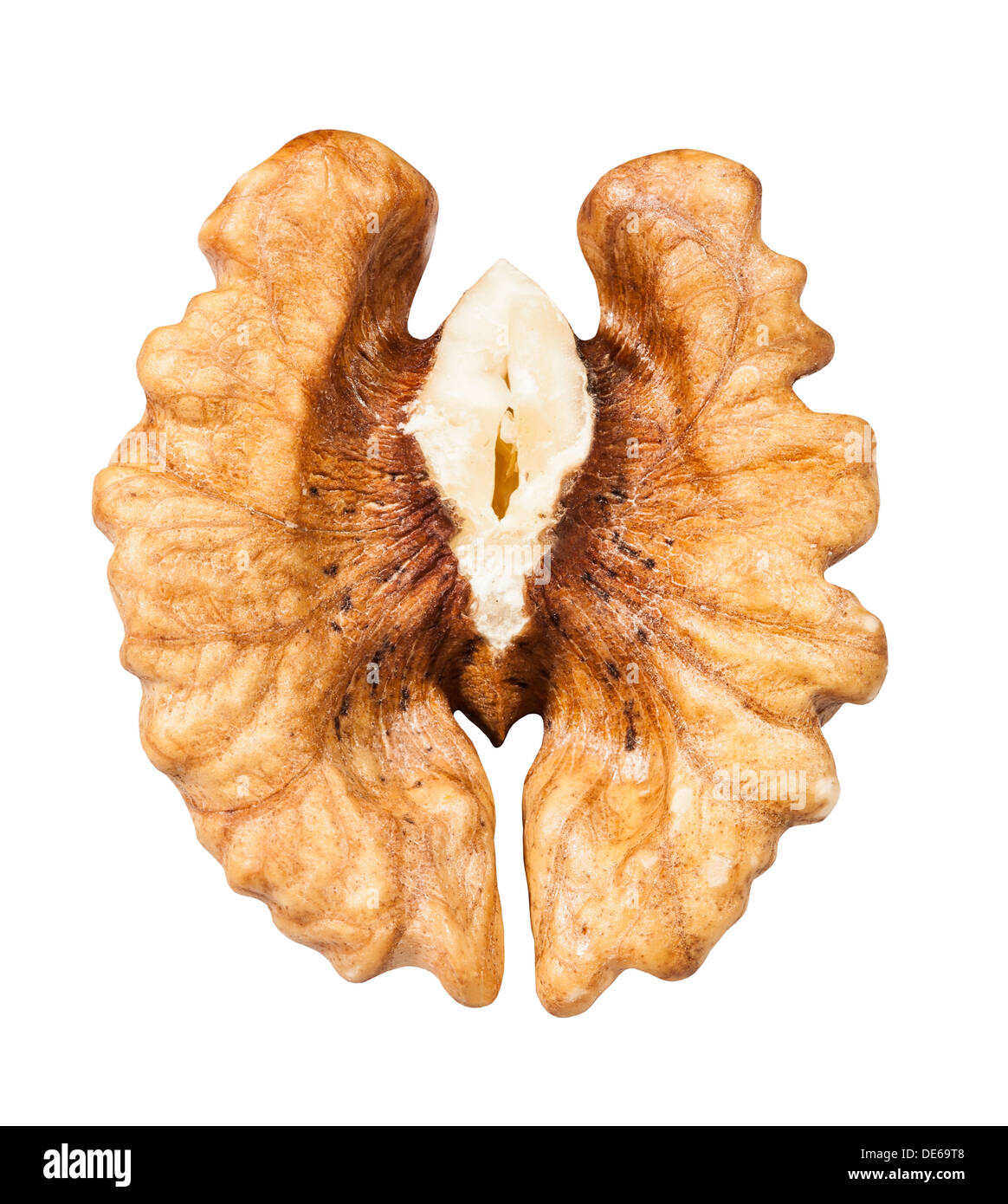 walnut one half on white background - Stock Image