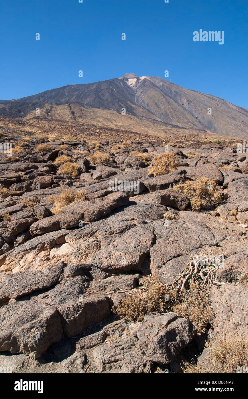 Pahoehoe lava at the foot of the mount Teide in Tenerife, Canary Islands. - Stock Image
