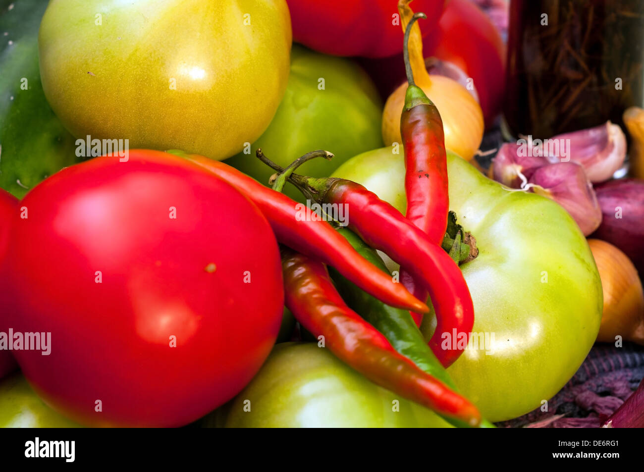 Ingredients for pickles including tomatoes (red and green) cucumbers, hot peppers, onions (red and white), garlic - Stock Image