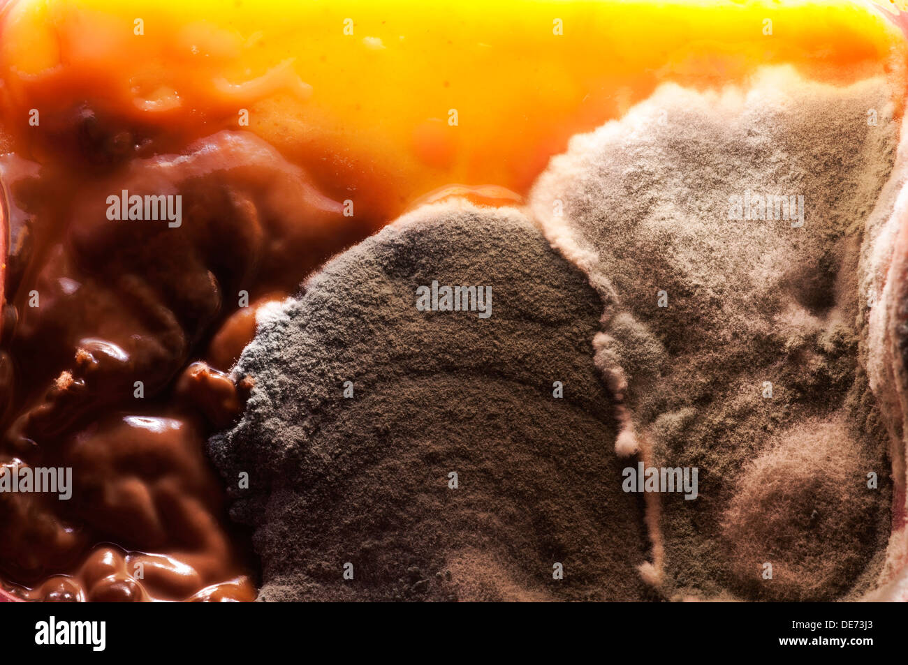 Fungus growing in the old food - Stock Image