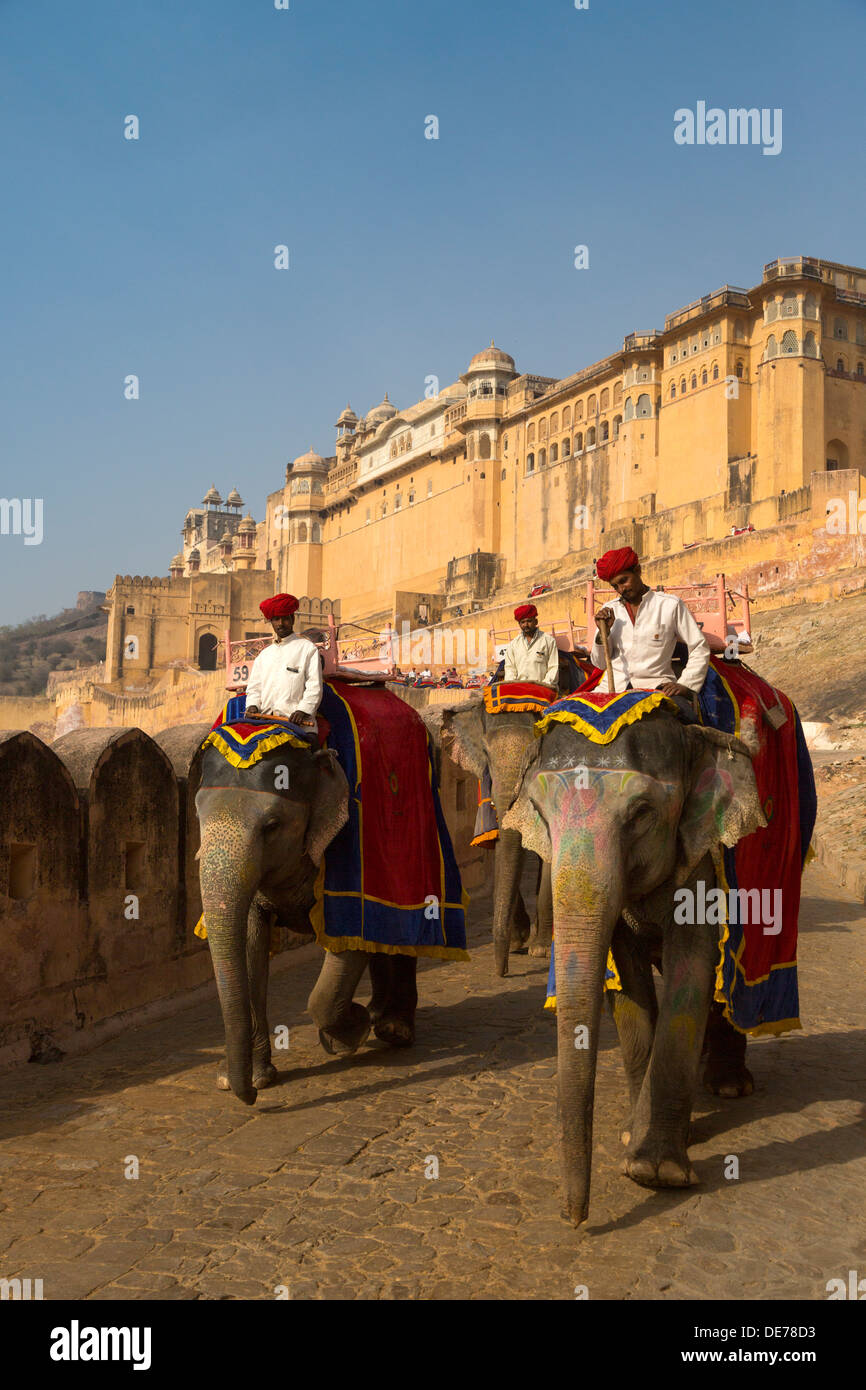 India, Rajasthan, Jaipur, elephants at the amber fort - Stock Image