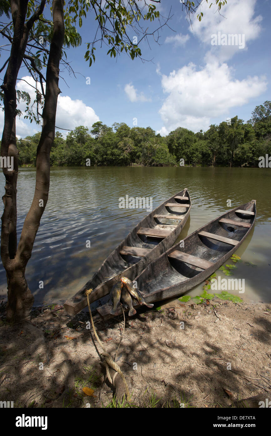dug out canoes on a oxbow lake off the Rewa River, Rupununi, Guyana, South America - Stock Image