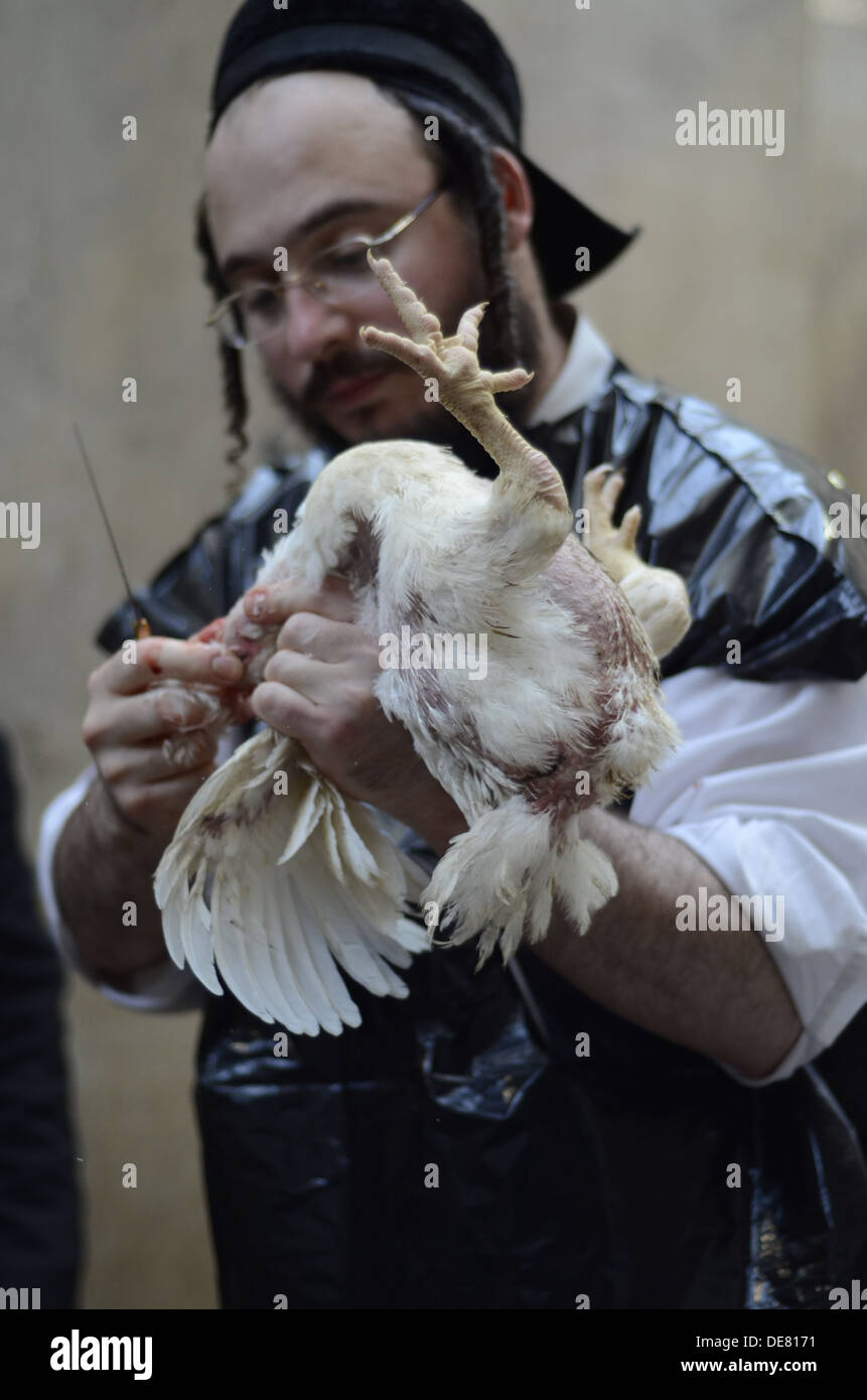 Kosher Chicken slaughter by a Shohet of the ultra religious Neturei Kata sect, Jerusalem, Israel - Stock Image