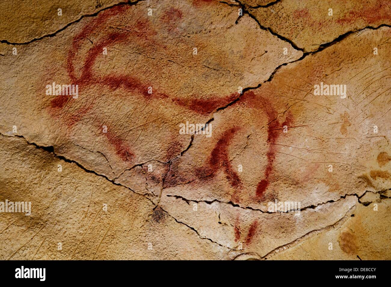 Deer in Altamira´s reproduction cave Neo Cave  Upper Paleolithic cave paintings  Altamira museum  UNESCO World Heritage - Stock Image