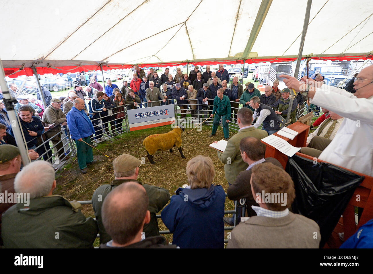 5dba3443 Kelso Ram Sales Stock Photos & Kelso Ram Sales Stock Images - Alamy