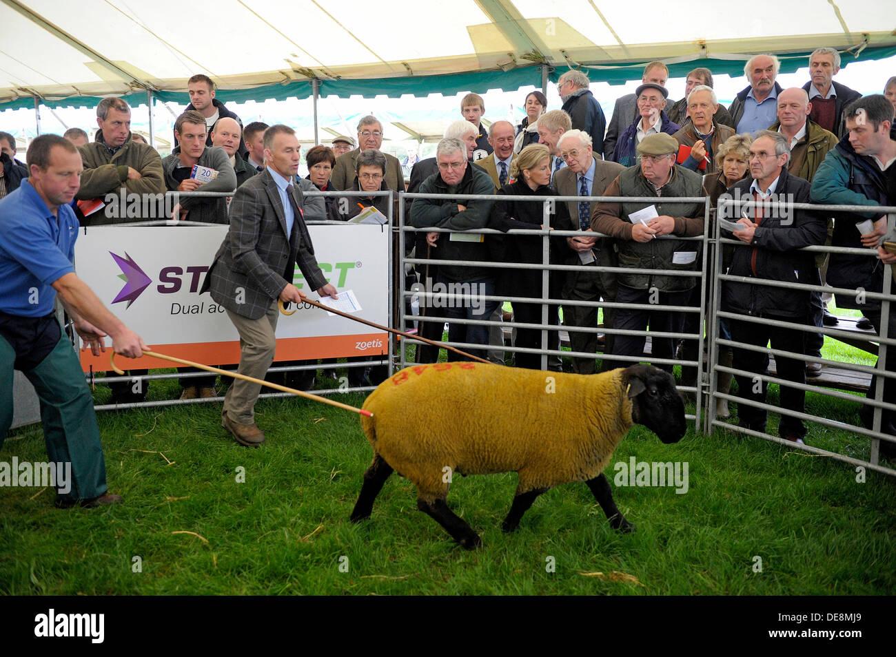 858b4584 KELSO , Scotland, UK. 13 September 2013. Border Union Agricultural ...