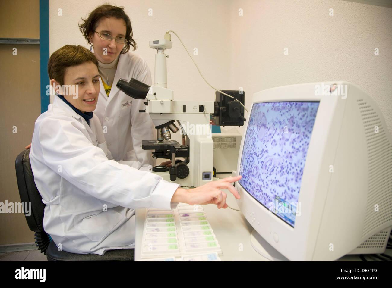 Microscopy and cells image, Laboratory of Pathological anatomy, Departamento de Producción y Sanidad Animal, Neiker Tecnalia, - Stock Image