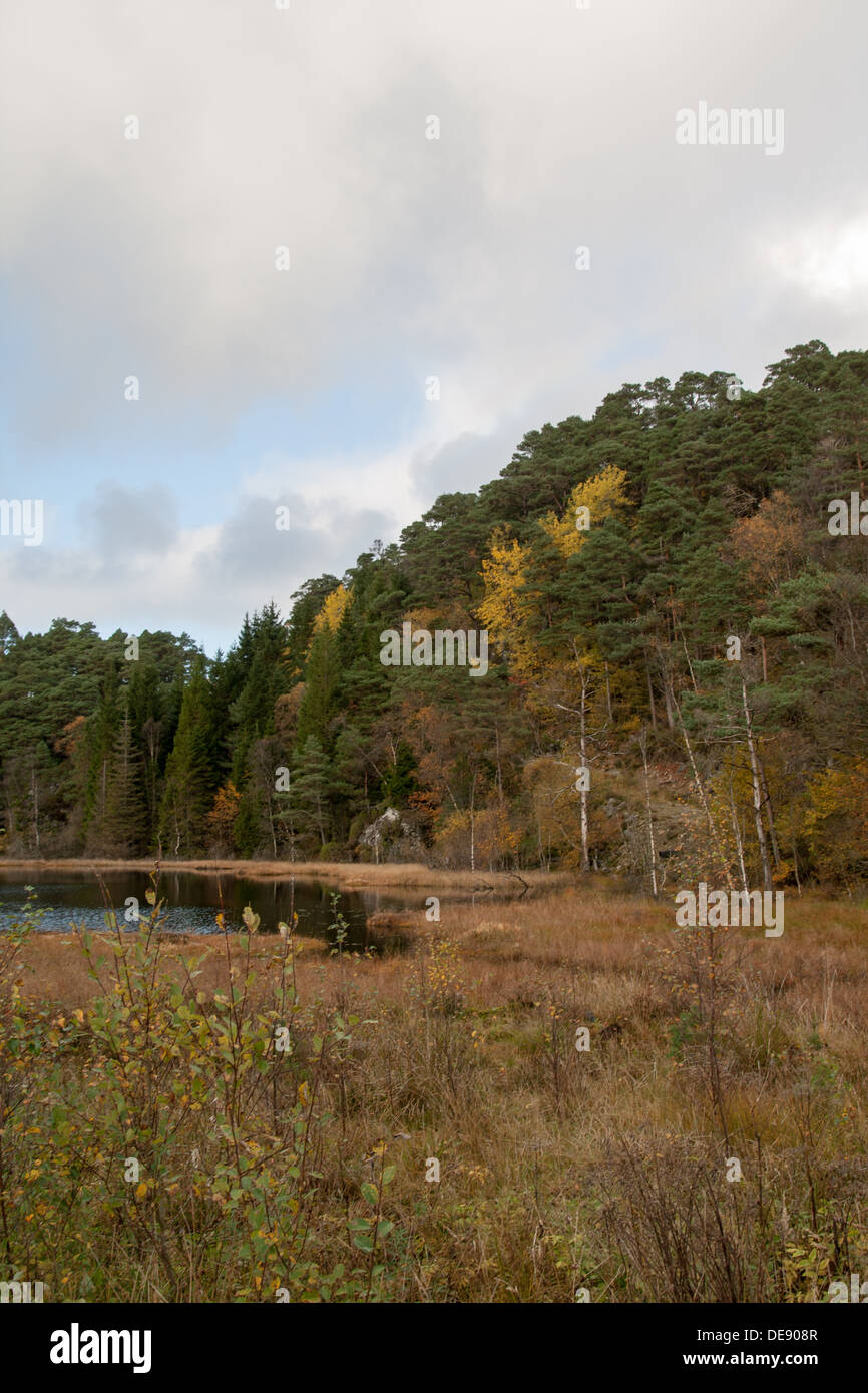 Autumn landscape in Norway - Stock Image