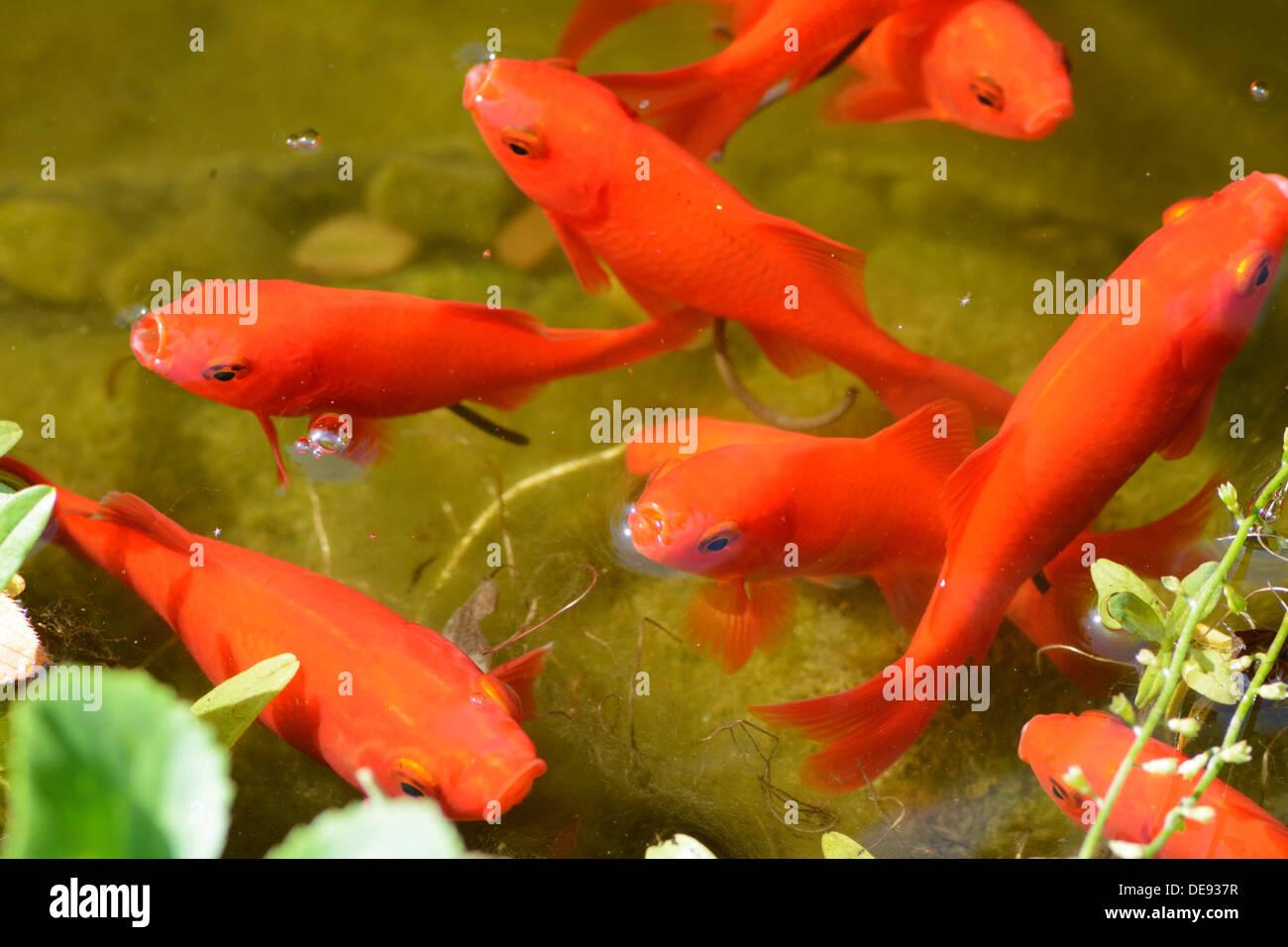 Fancy Color Glass Fish Images - Coloring Page - senderolasbrumas.info