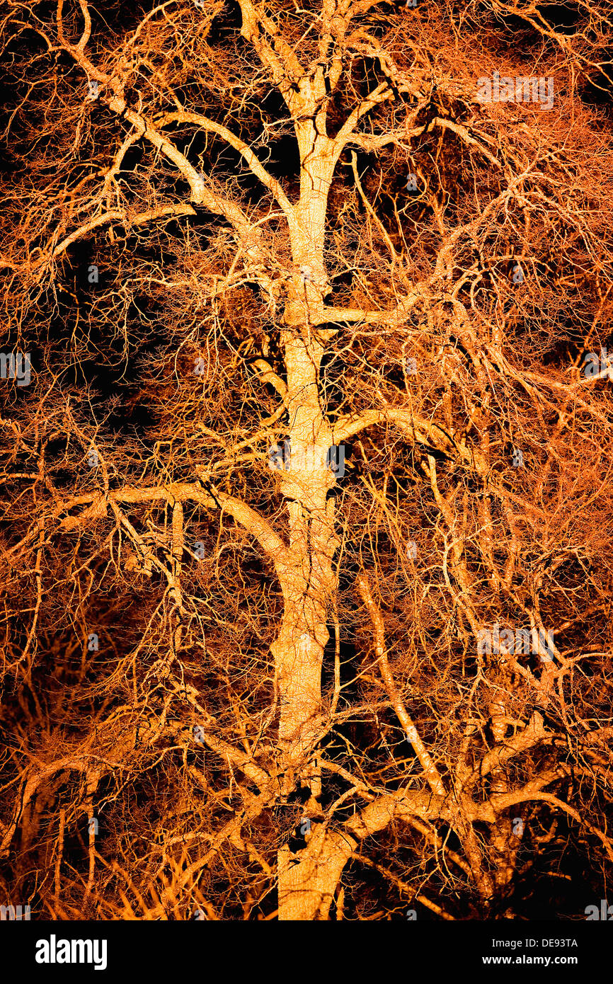 Illuminated Tree With Many Branches at Night - Stock Image