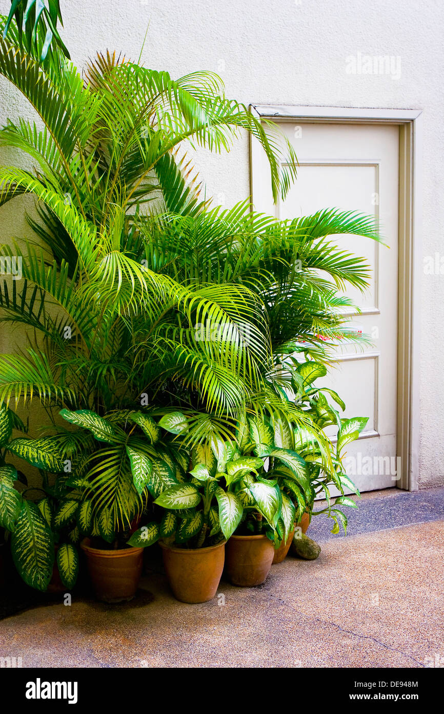 Large Green Potted Plants Next to Door - Stock Image