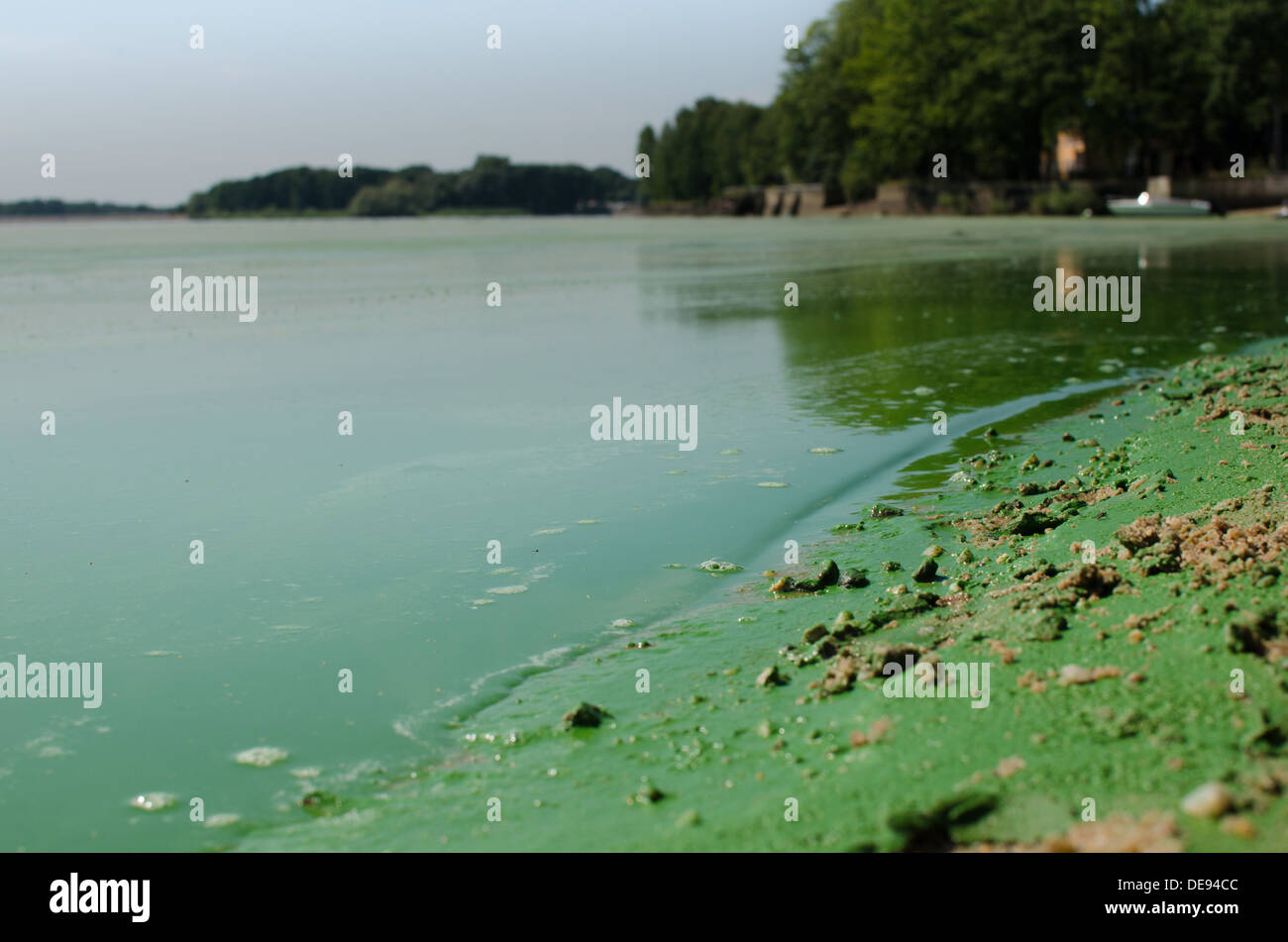 Dirty, green beach - Stock Image
