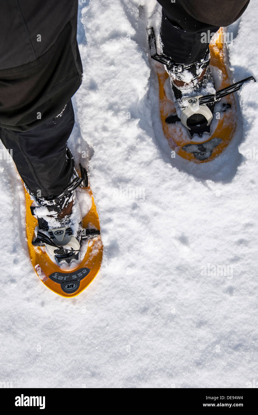 Close up of walker wearing snowshoes on feet while snowshoeing in deep powder snow in winter - Stock Image