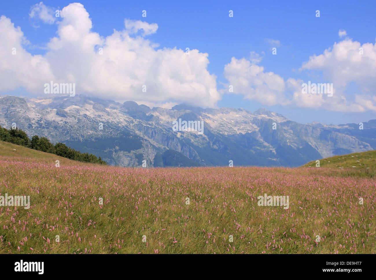 Colorful alpine meadow, Alpe Adria Trail, Julian Alps, Slovenia, Central Europe - Stock Image