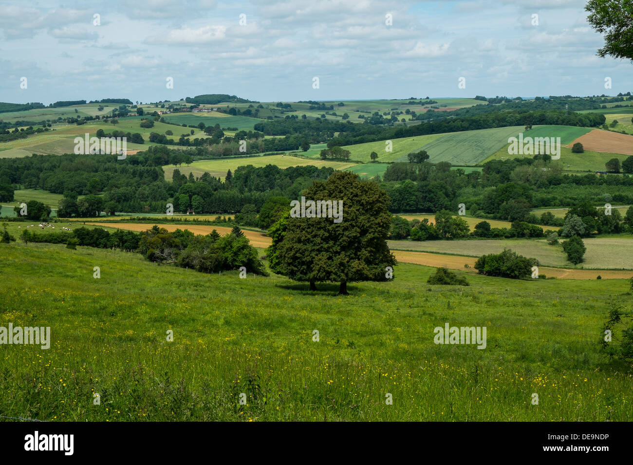 pastoral countryside - Stock Image