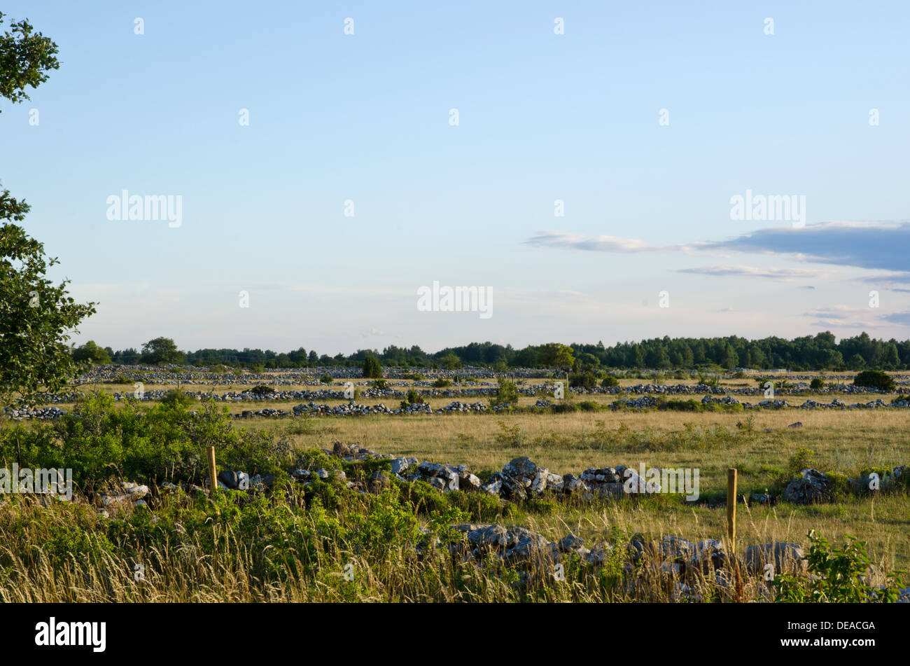 Meadow landscape with a lot of stonewalls - Stock Image