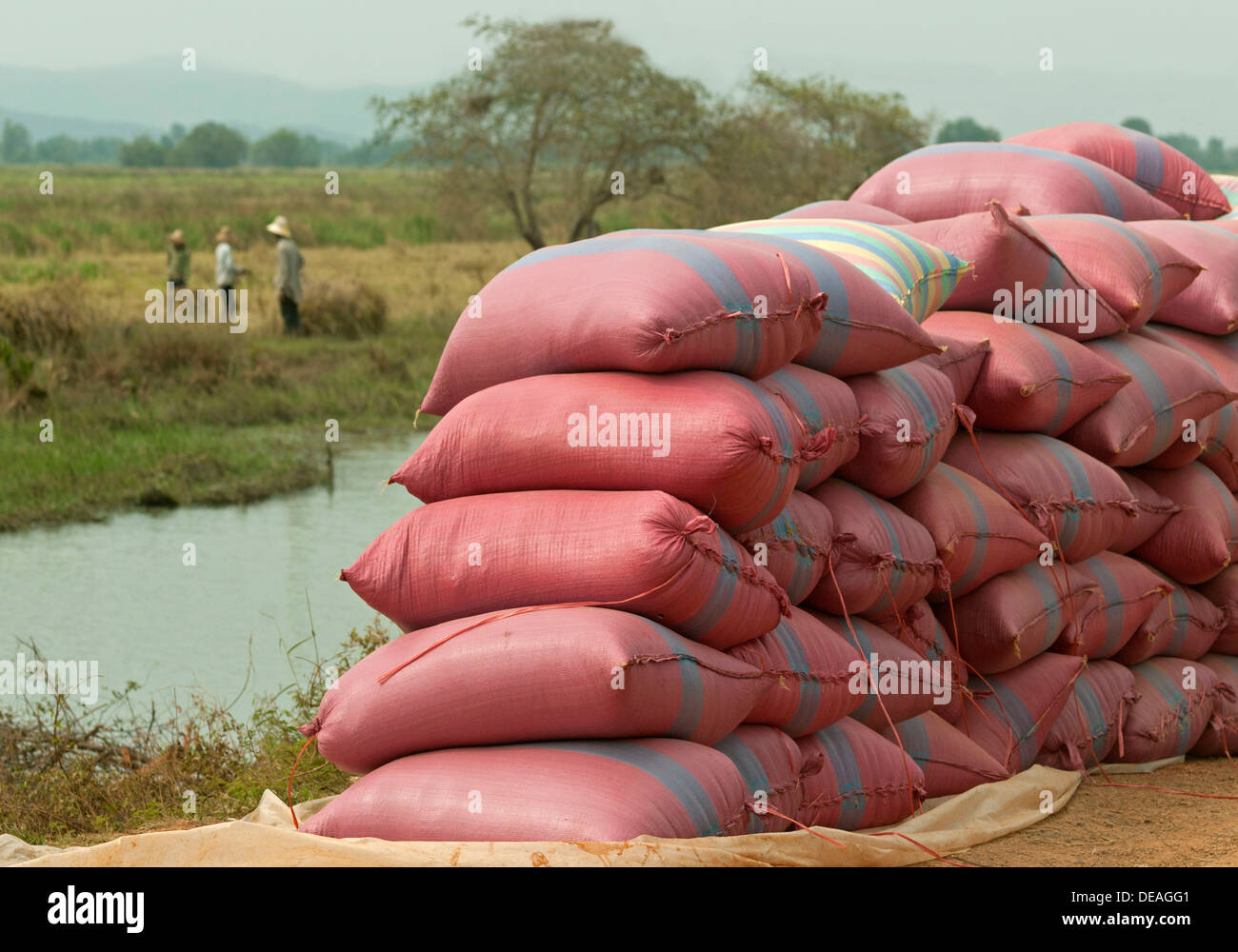Rice bags waiting to be transported, Battambang, Cambodia, Southeast Asia - Stock Image