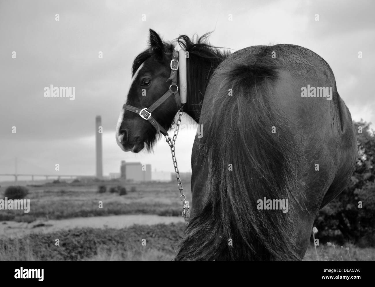 The horse on the saltings of Erith Kent, england Stock Photo