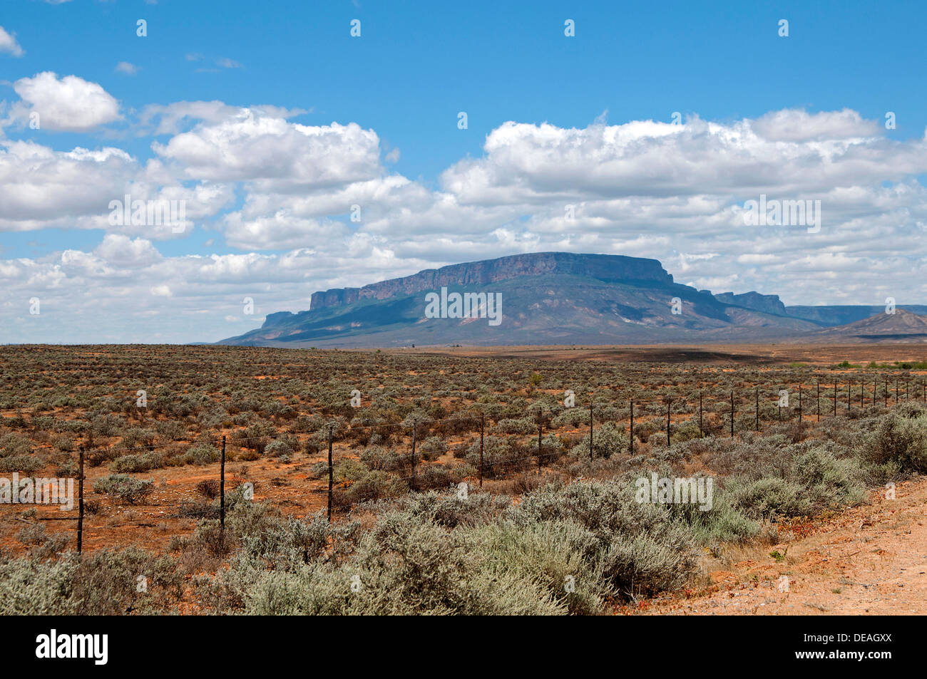 Succulents in the Knersvlakte Plateau in front of the Matzikama Mountains, Knersvlakte, near Vanrhynsdorp, Knersvlakte - Stock Image