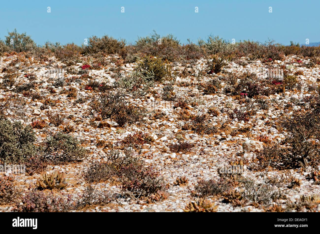 Quartz pebble field, Knersvlakte, near Vanrhynsdorp, Knersvlakte, South Africa - Stock Image