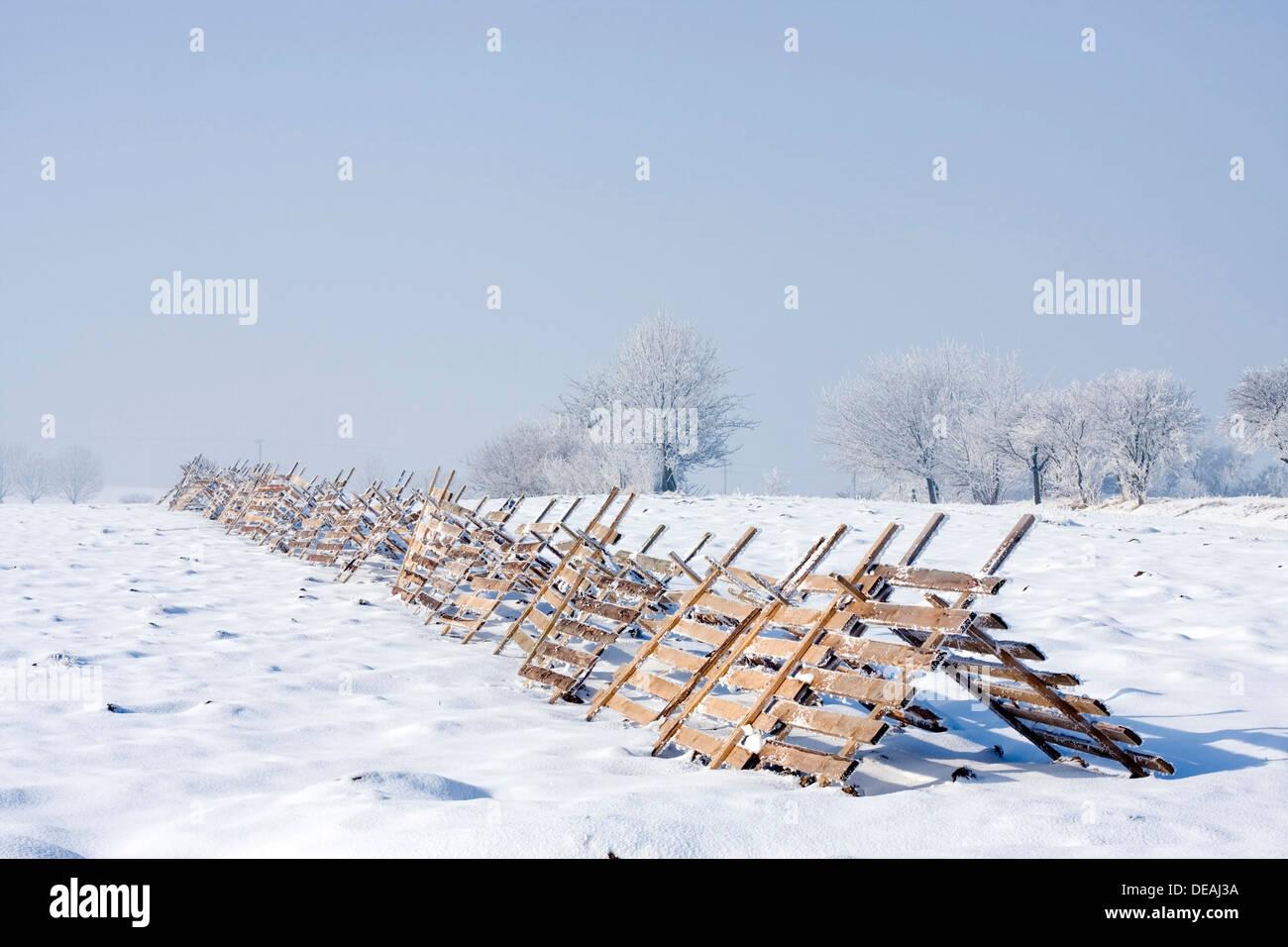 Windbreaks near Oldrichovice, Zlin Region, Czech Republic, Europe - Stock Image