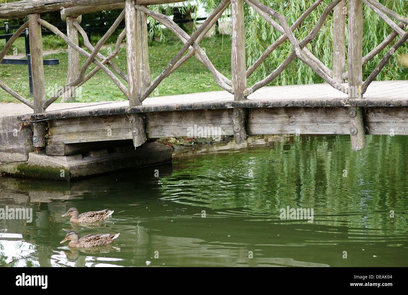Duck under the wooden bridge Stock Photo