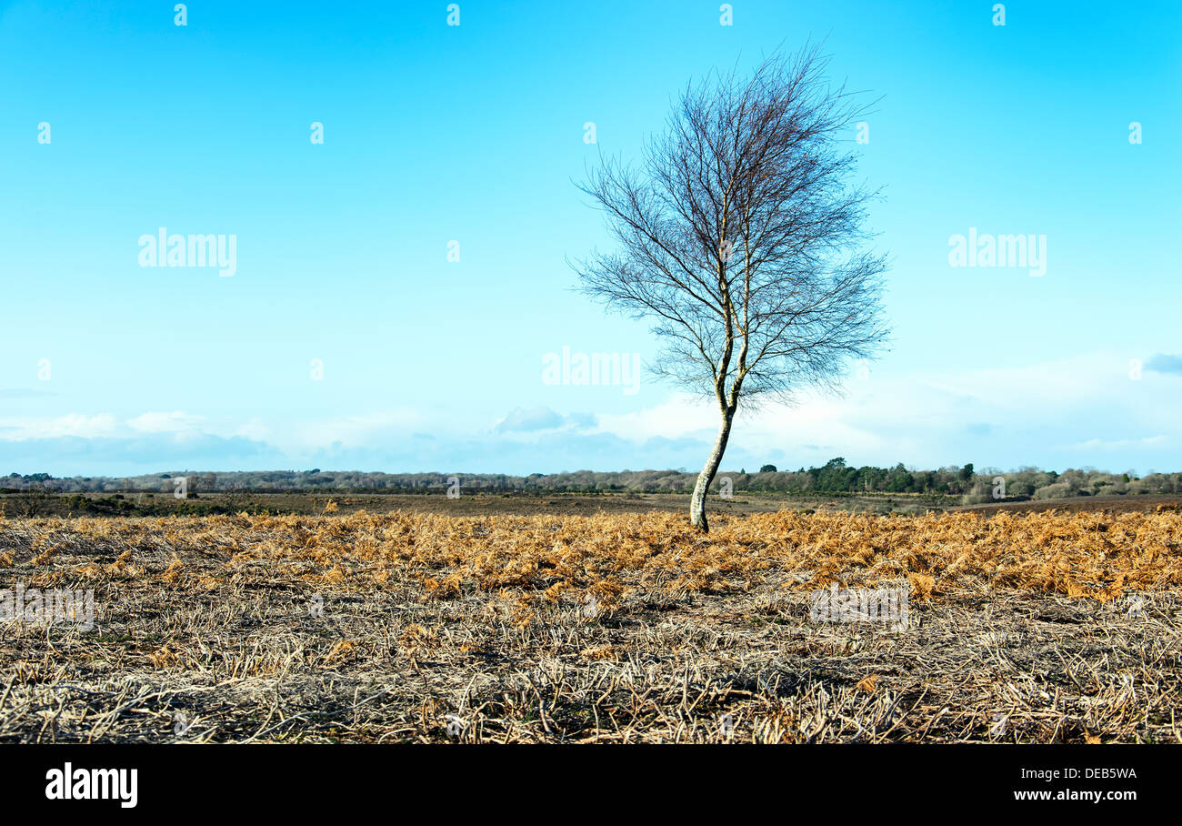 A lone winter tree on desolate moorland in the New Forest National Park in Hampshire - Stock Image
