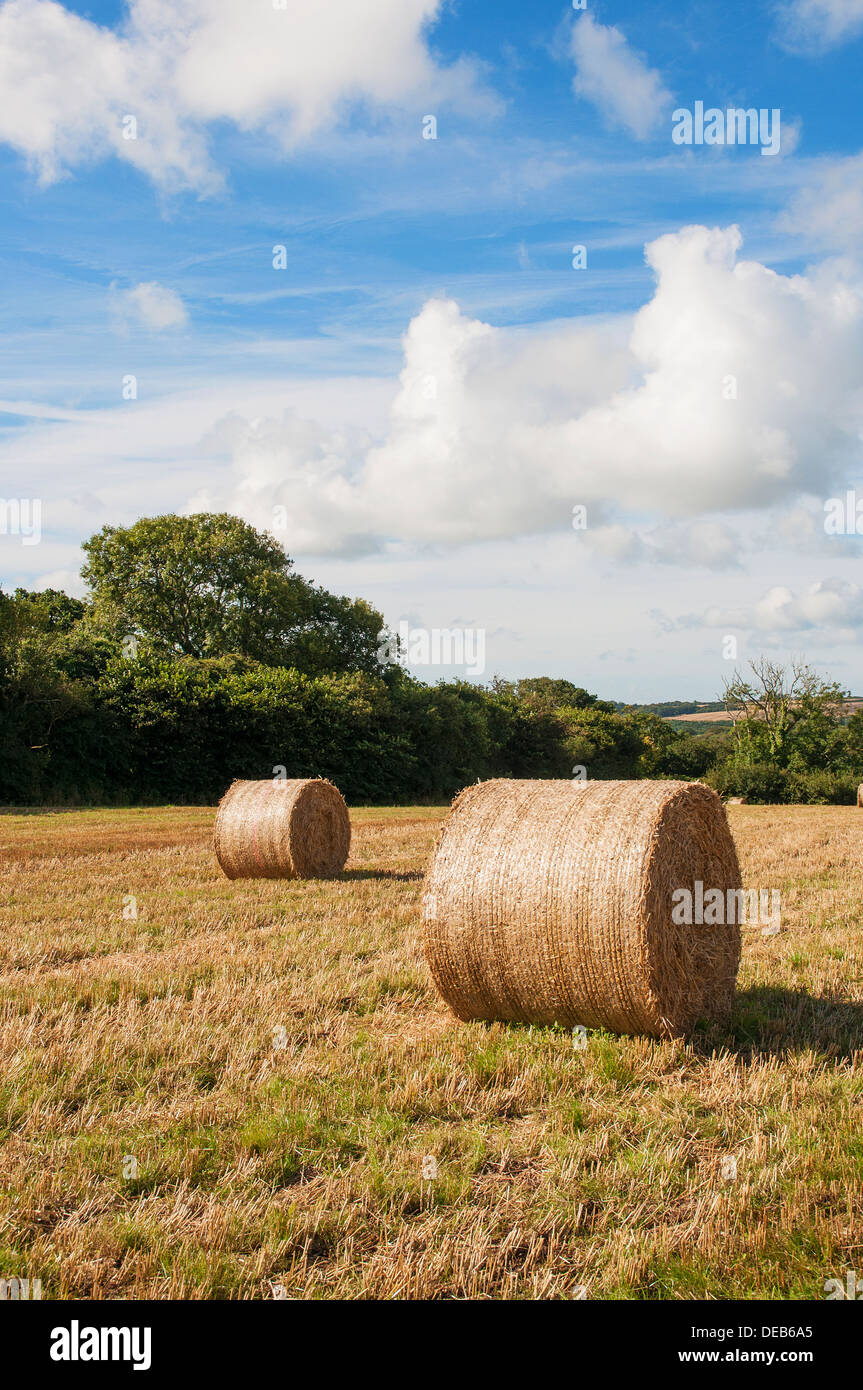 hay bales in a field in somerset, england, uk - Stock Image