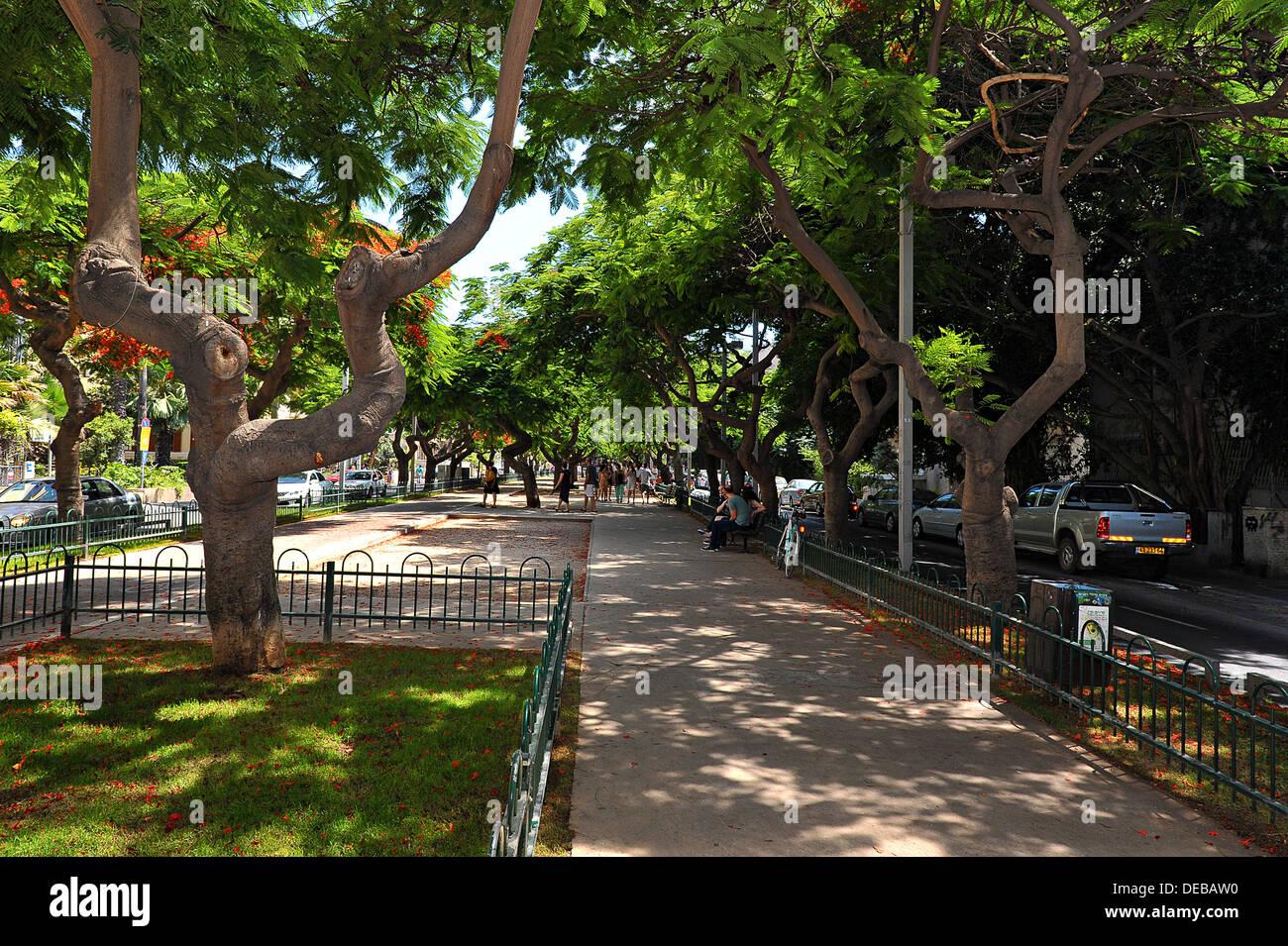 A section in Rothschild Boulevard, Tel Aviv, Israel - Stock Image
