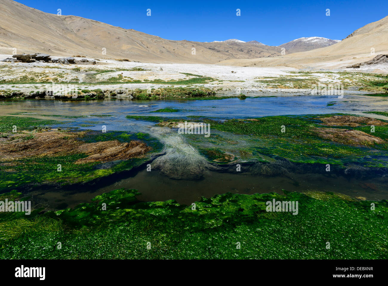 Hot springs, Korzok, Ladakh, Jammu and Kashmir, India Stock Photo