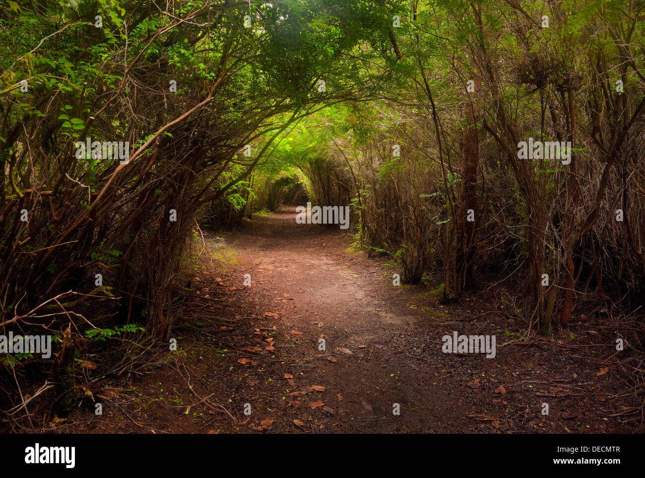 OREGON - Tunnel Trail in the South Slough National Estuarine Research Reserve. - Stock Image