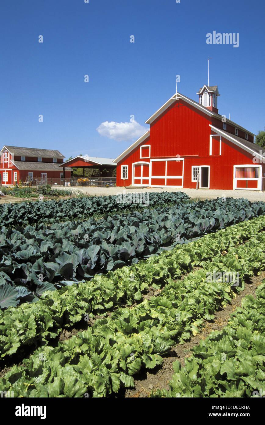 Vegetables And Red Barn At The Faulkner Ranch Santa Paula Stock