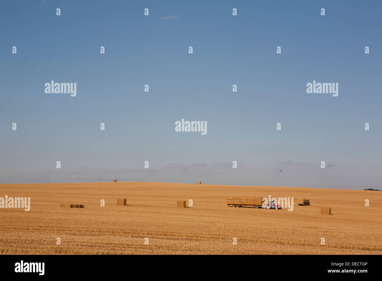 A red tractor (Massey Ferguson) collects straw bales on a trailer, a typical English summer season harvest scene. - Stock Image