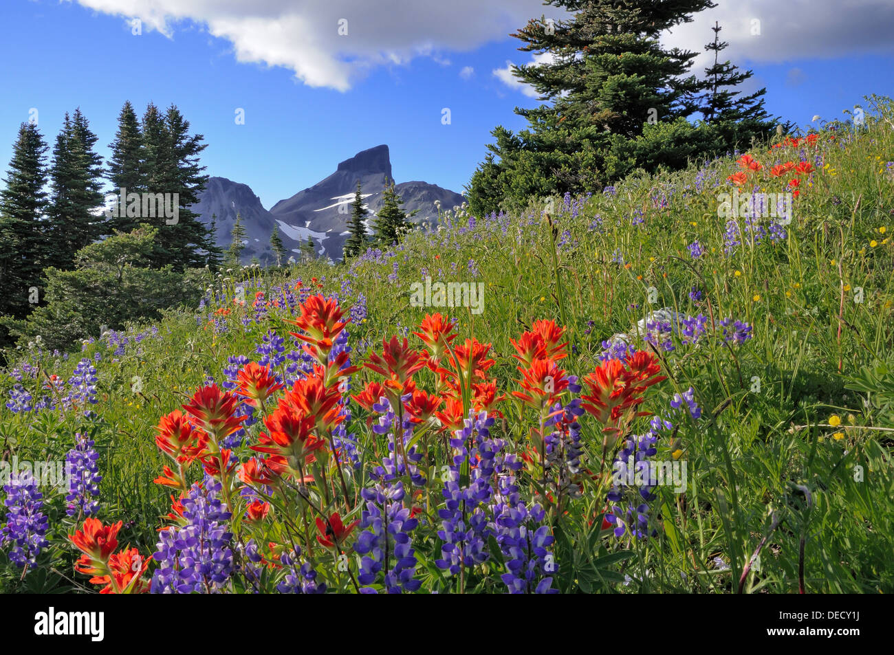 Black Tusk, wildflowers, Garibaldi Provincial Park, British Columbia, Canada - Stock Image