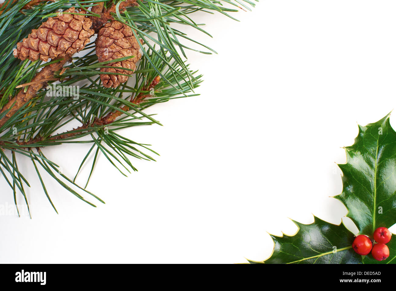 A Christmas pine tree branch and cone on a white background. - Stock Image