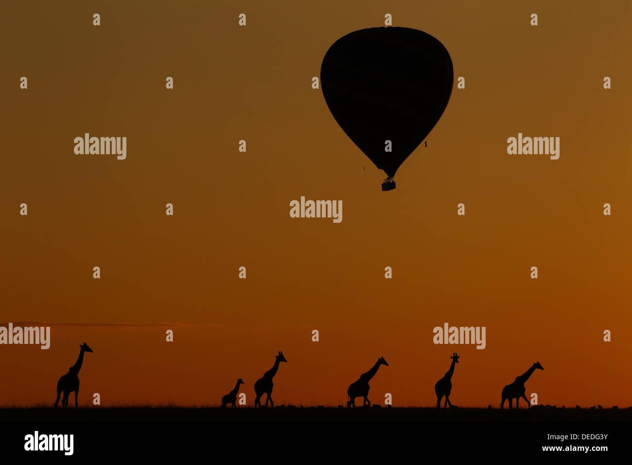 Hot Air Balloon Safari in Masai Mara, Kenya, Africa Stock Photo