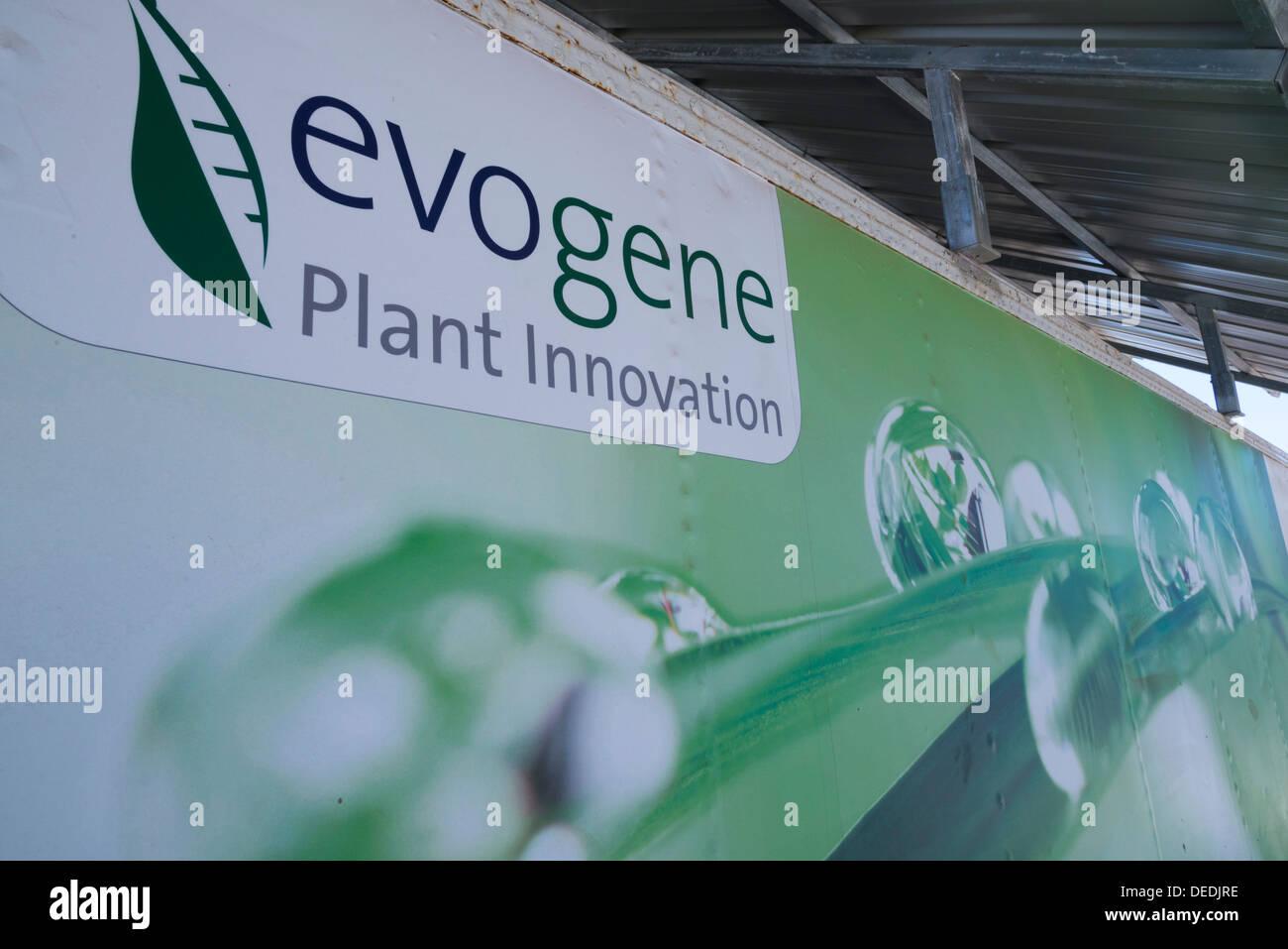 Evogene. genetically modified crops. Rehovot. Israel. - Stock Image