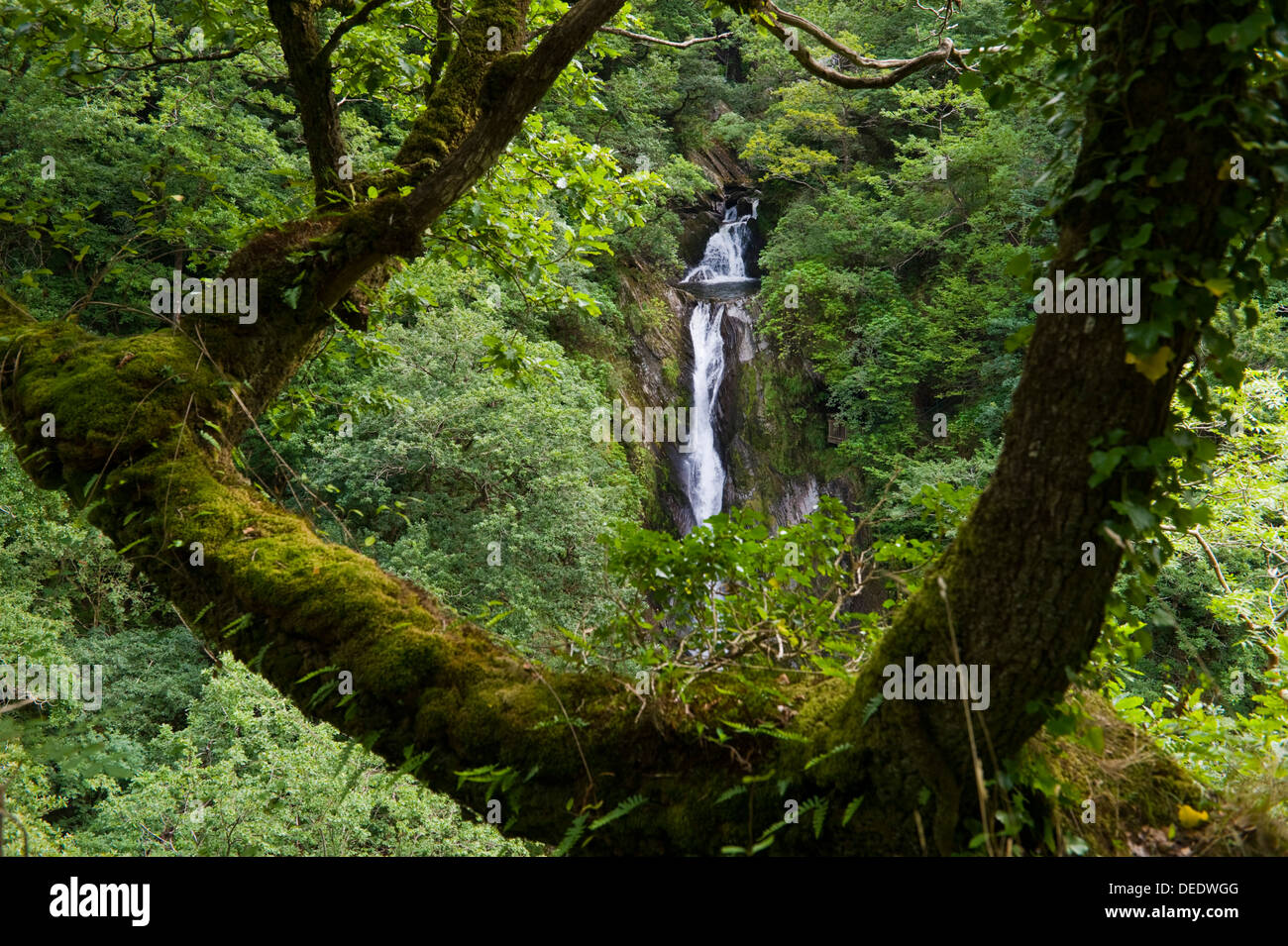 Waterfall viewed from the Nature Trail on the Jacob's Ladder footpath below Devil's Bridge near Aberystwyth Ceredigion West Wales UK - Stock Image
