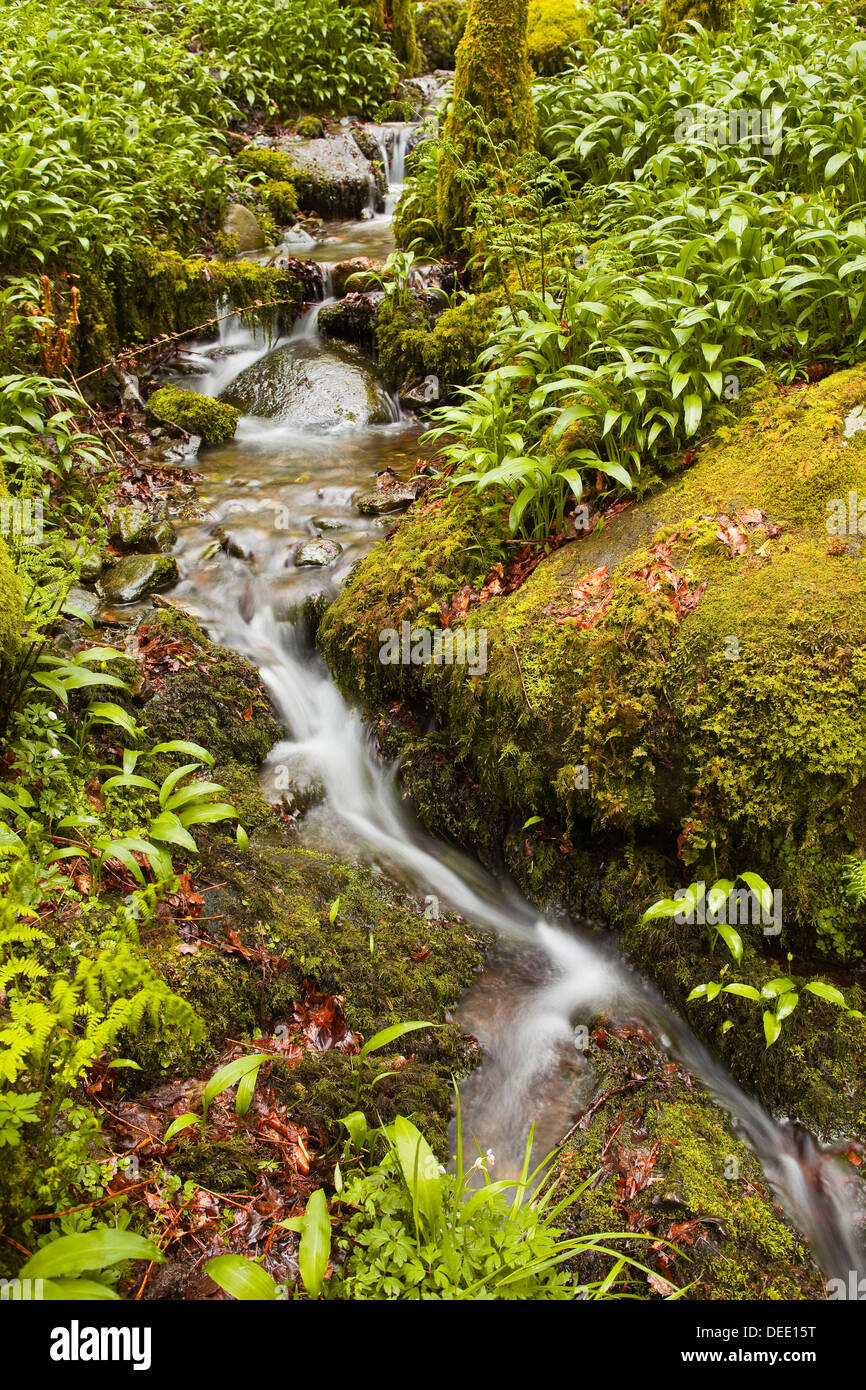 Part of Stock Ghyll Force waterfall near Ambleside, Lake District National Park, Cumbria, England, United Kingdom, Europe - Stock Image