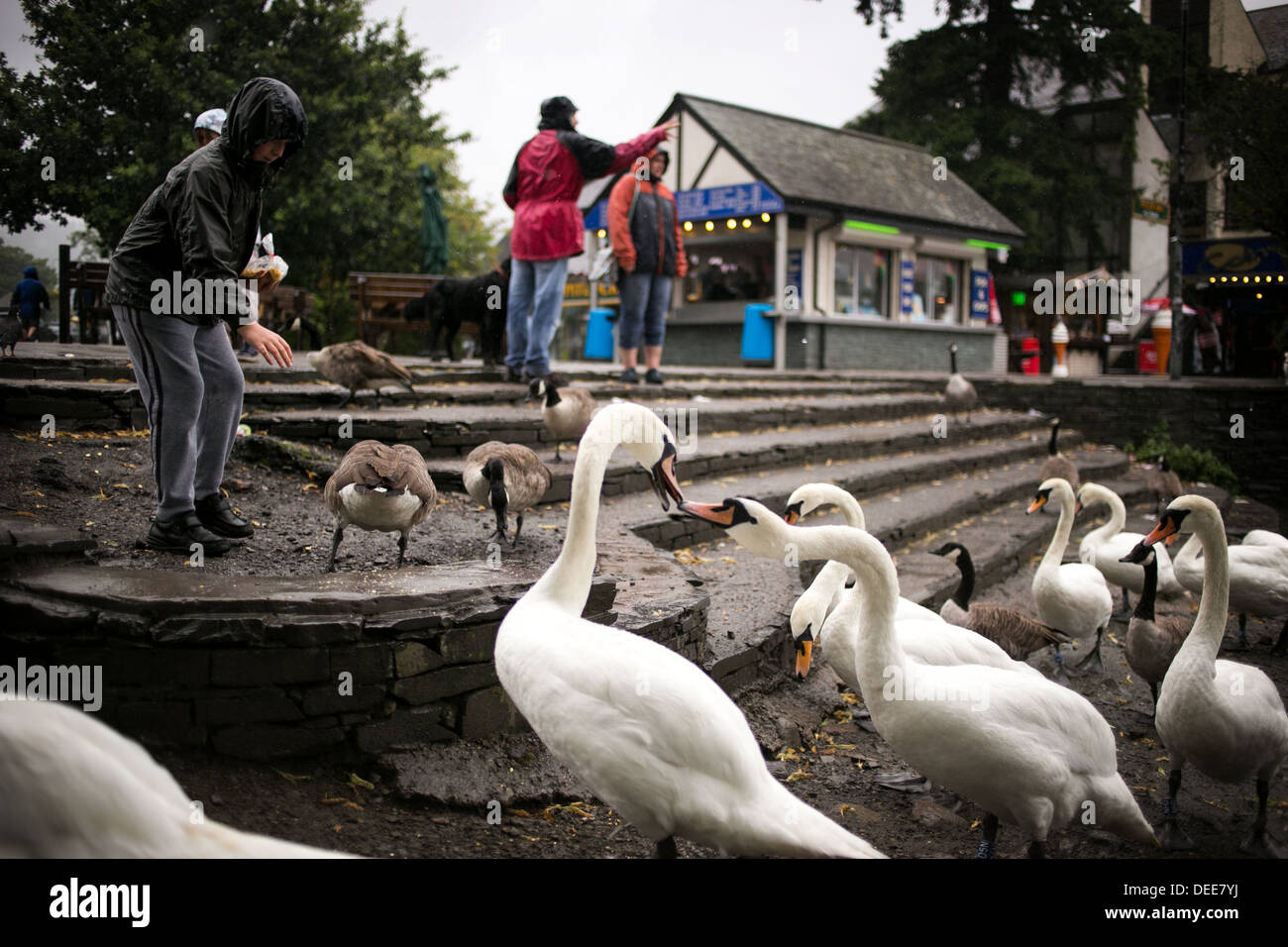 Weather picture . Rain at Windemere in the Lake District - Stock Image