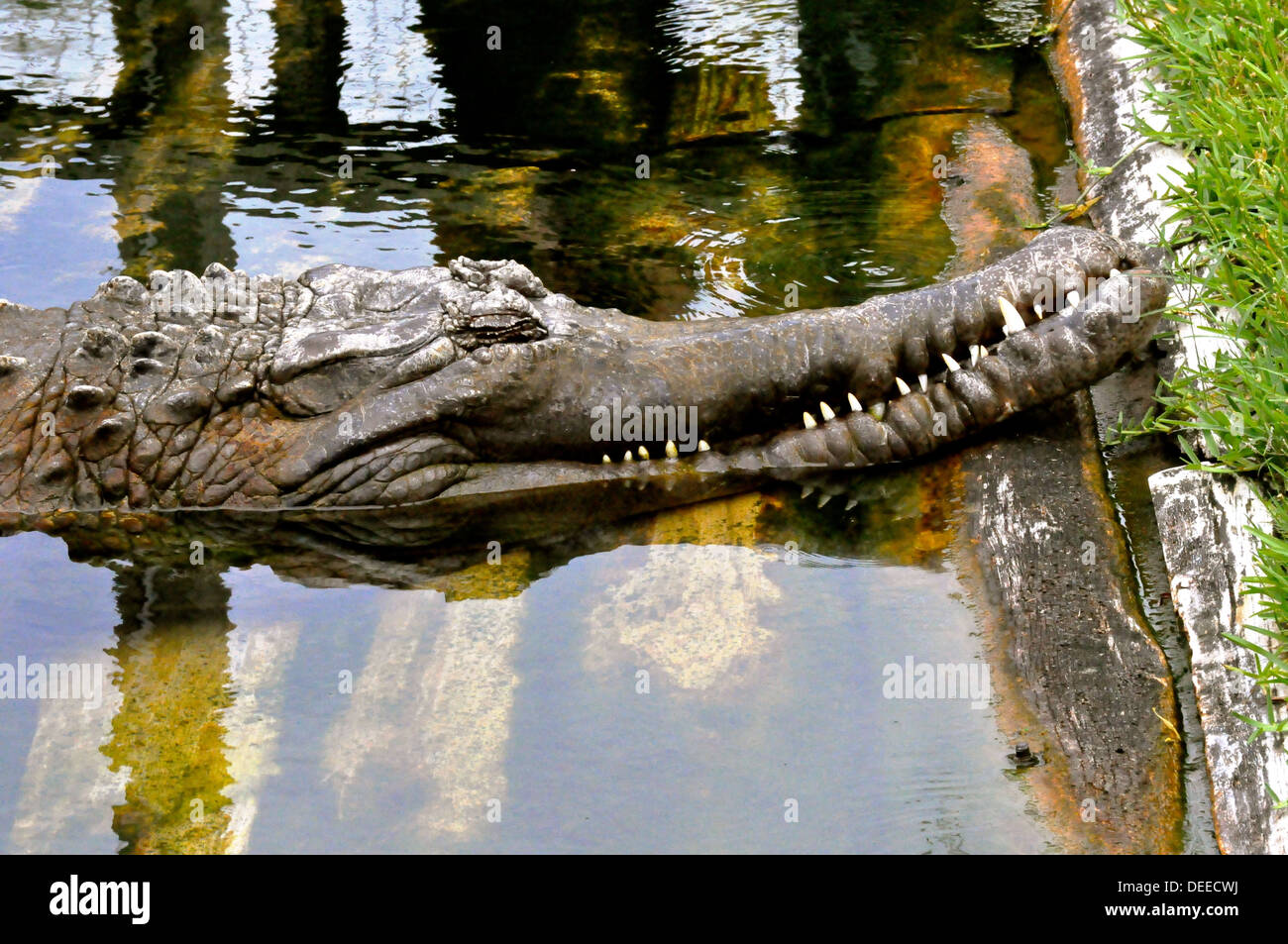 Crocodile snoozes on the bank - Stock Image