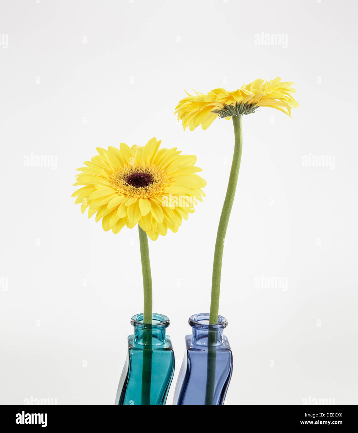 Two Gerberas in colorful glass vases - Stock Image